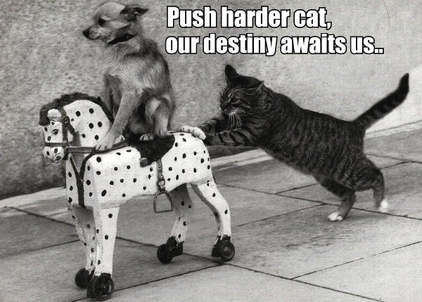 Push-harder-cat-our-destiny-awaits-us..