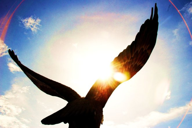 soaring_eagle_by_aku_scandal